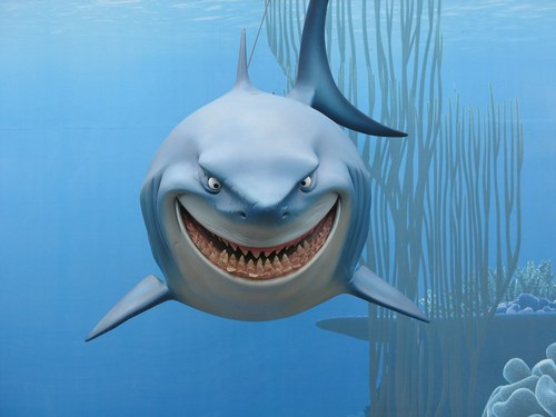 image gang de requins